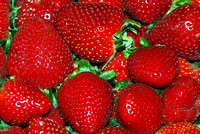 101138 Bright Red Strawberries