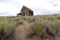 100426 Sagebrush and Old Cabin