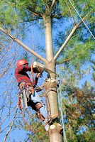 101433 Professional Removing Tree