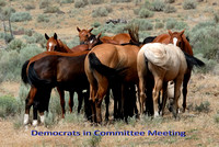 100728100 Democrats In Committee Meeting