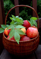 100256 Basket Of Apples, Peaches, and Nectarines