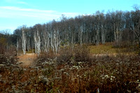 100313 Woods In Late Fall