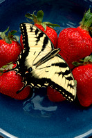 100181 A Butterfly On Strawberries
