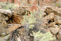 102745 - Sagebrush, Boulders, and Rocks