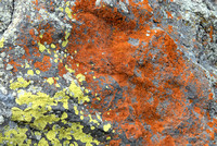 102193 - Different Colors of Lichens