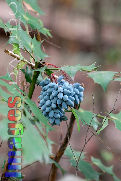 Images By Davido Llc Plants Products 100137 Blue
