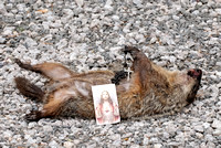 100840 Prayers For A Dead Groundhog